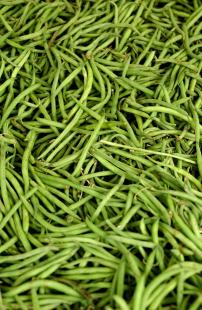 haricots verts  legumes alimentation